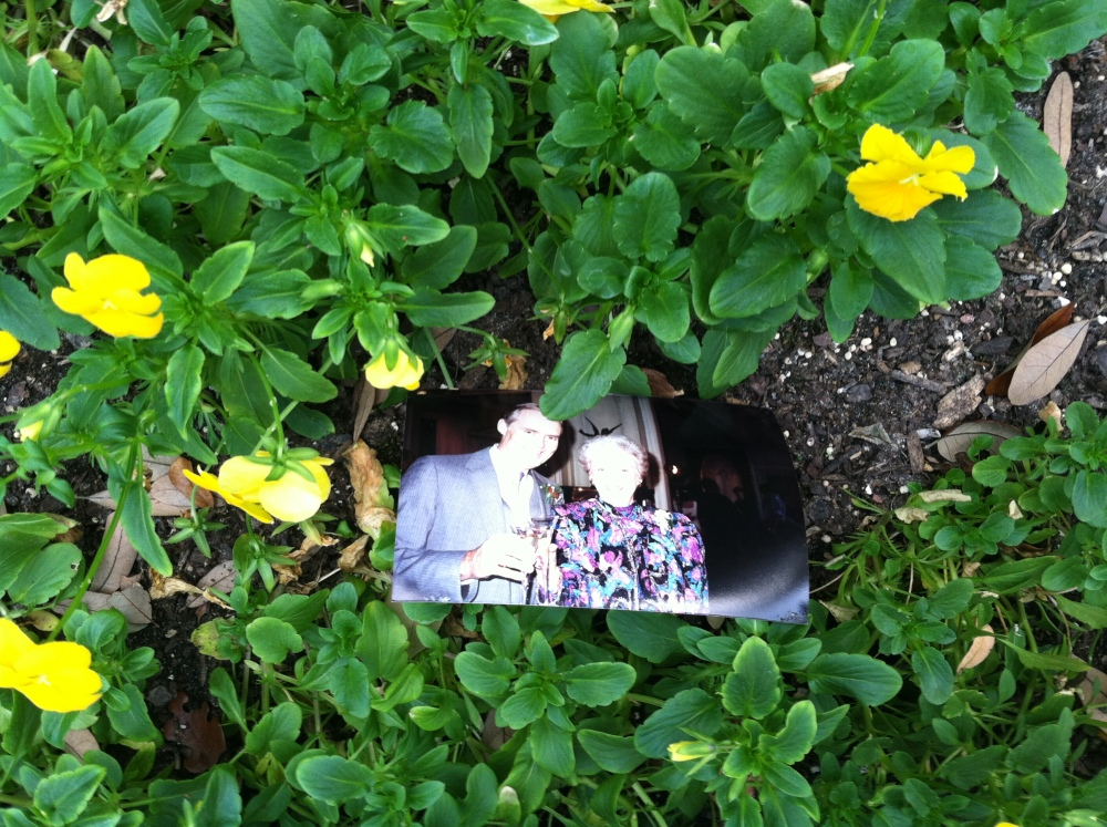 A Photo in The Flowerbed